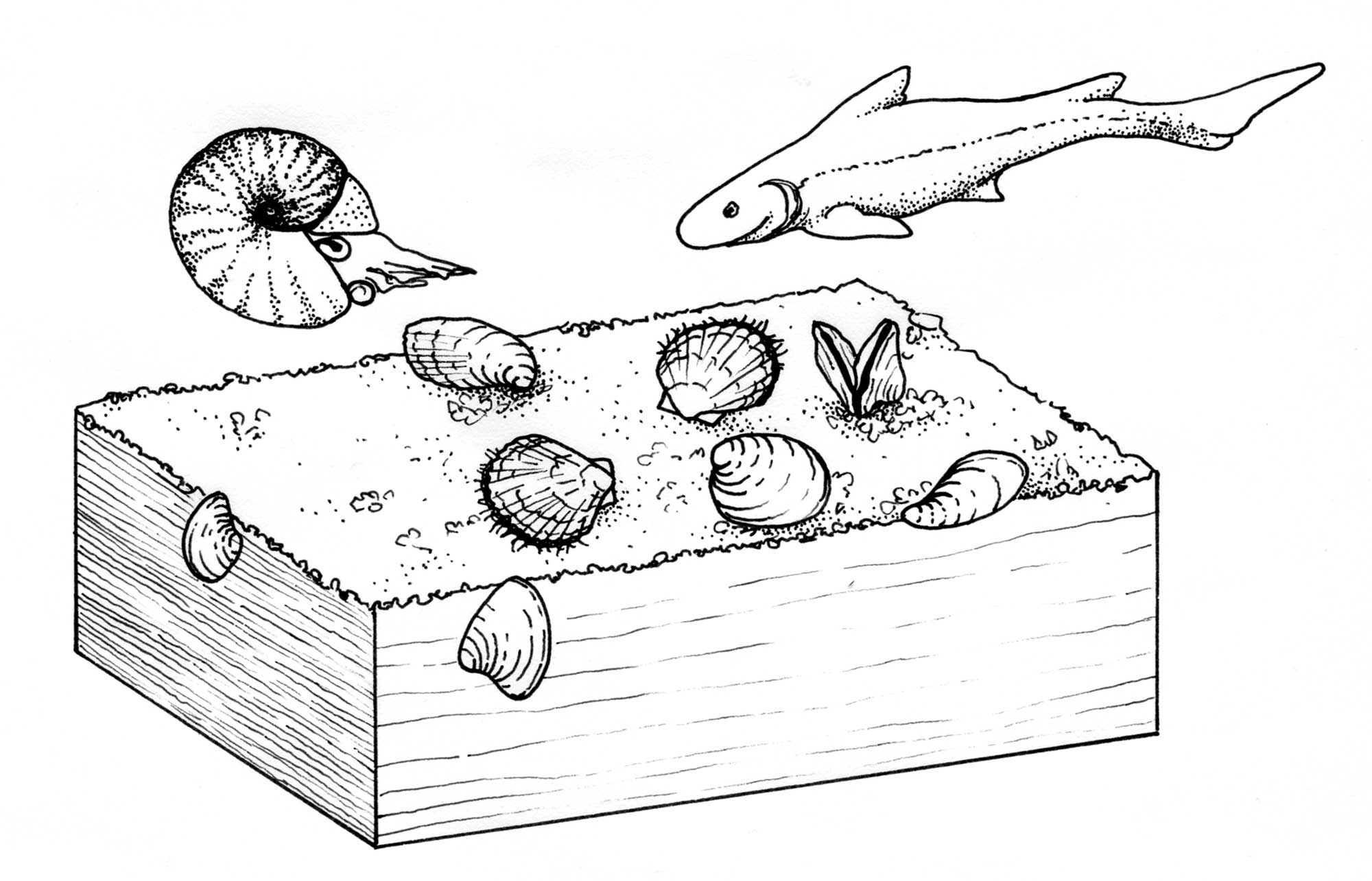 Illustration of the life habits of Triassic bivalves.